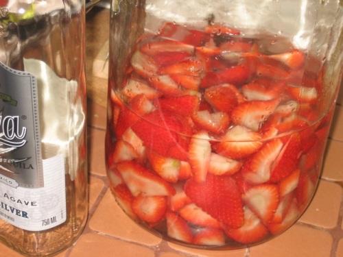 tequilla berries